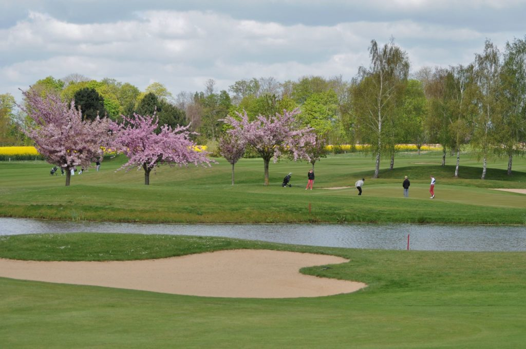 arbres green fairway putting clubs de golf