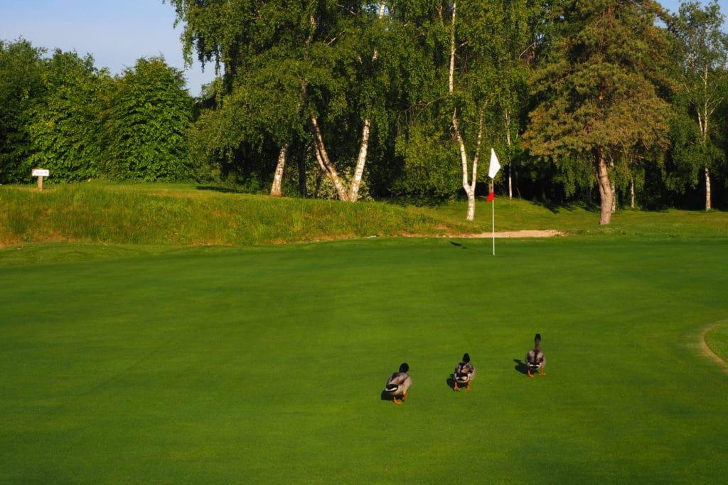Golf de Rueil-Malmaison Ile de France Parcours green fairway